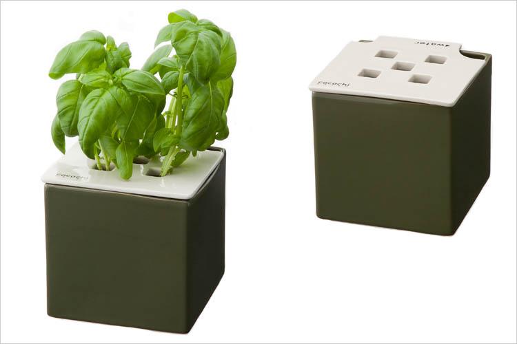 心知菜園 グリーン:バジル