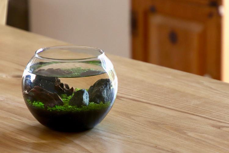 【水栽培】 聖新陶芸 育てる水草 Lサイズ