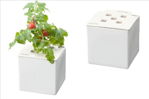 心知菜園 ホワイト:プチトマト