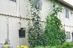 ホームハイポニカ303 グリーンカーテン
