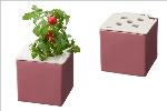 心知菜園 ピンク:プチトマト