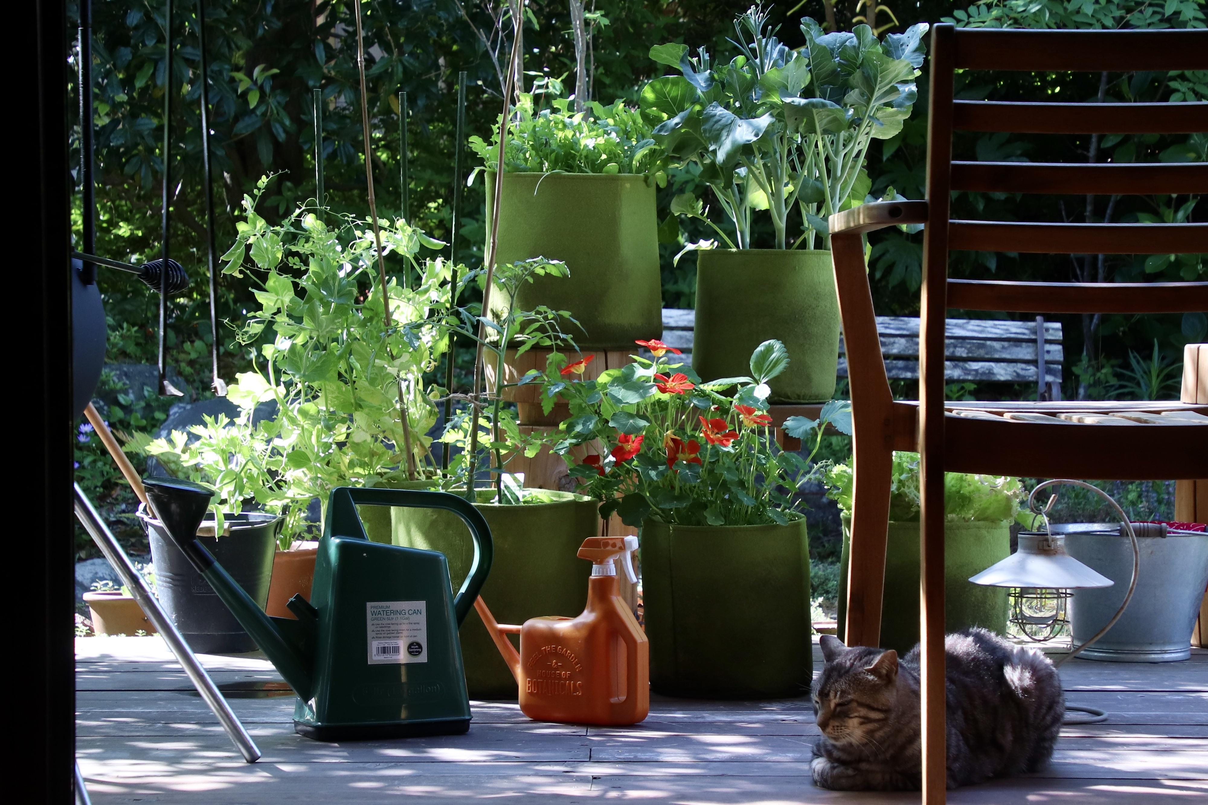 猫とベランダ野菜
